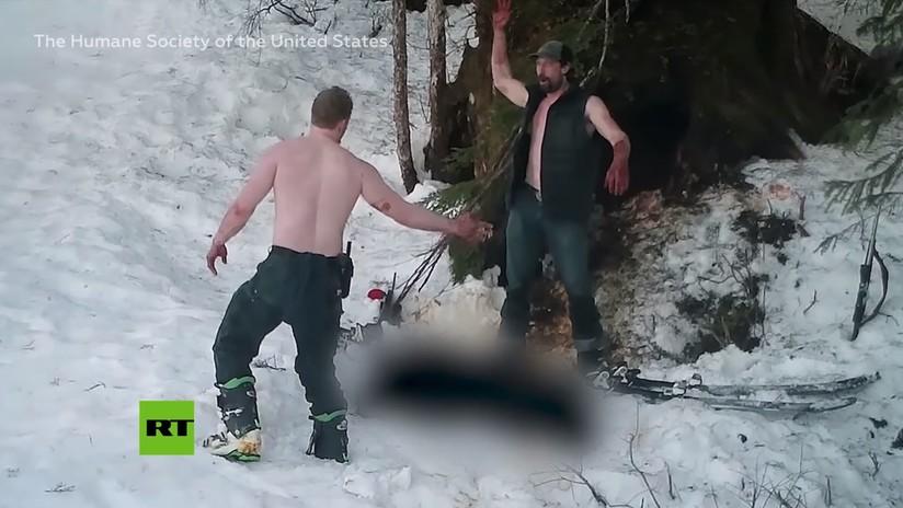 Padre e hijo matan a sangre fría a una osa y a sus crías en Alaska