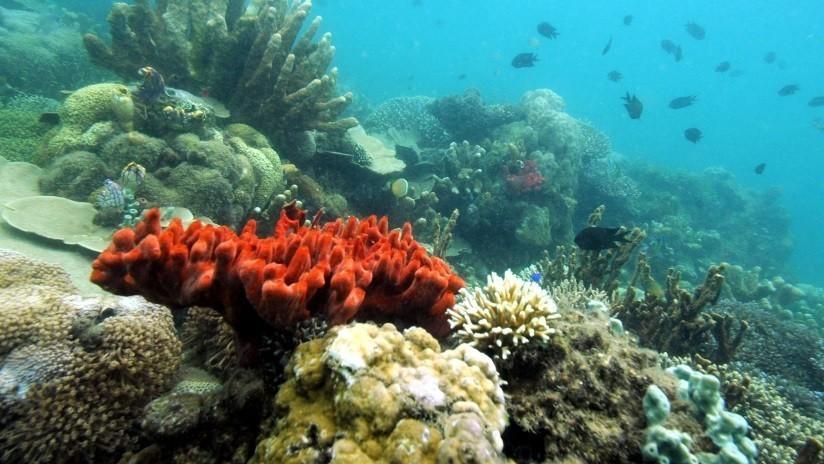 Alertan por una extraña enfermedad que pone en peligro los corales de Florida y el Caribe