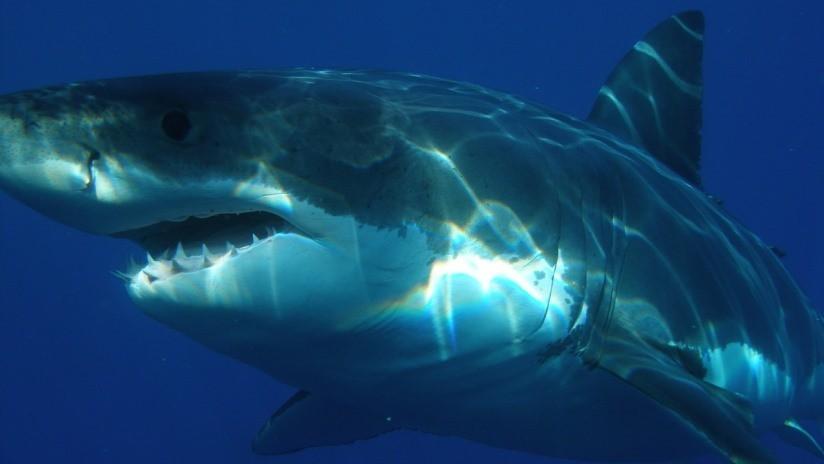 FOTO: Pescan una cabeza de tiburón de 100 kilos arrancada por un enorme depredador desconocido