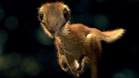 Reconstrucción de la apariencia de un T. rex bebé.
