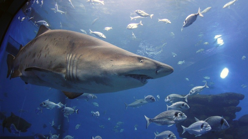FOTO: Mujer es mordida por un tiburón mientras tomaba clases de buceo