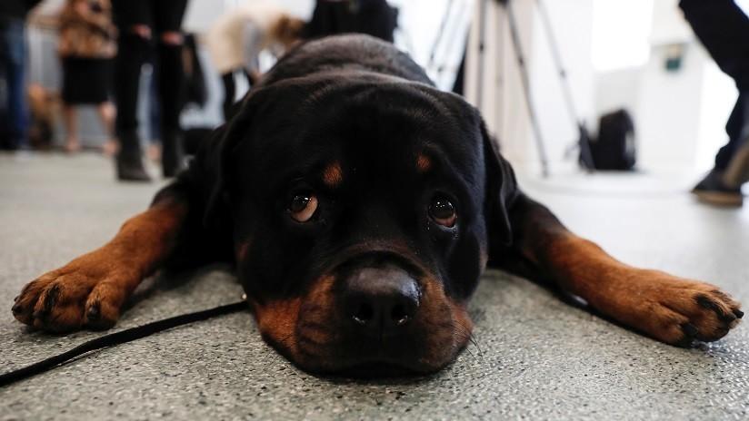 Este perro no quiso separarse de su dueño arrollado por un tren