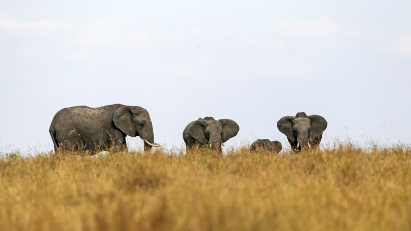 Un cazador africano explica por qué no se arrepiente de haber matado a más de 5.000 elefantes