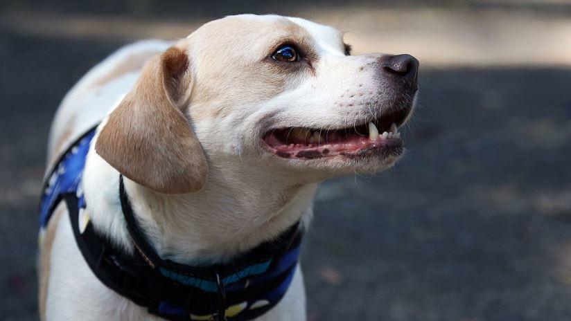 FOTOS: Un perro recauda el dinero para su quimioterapia vendiendo postres en México