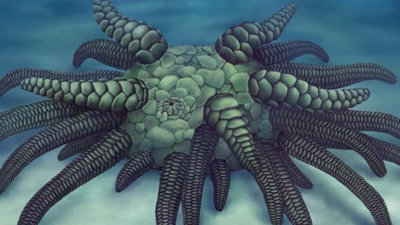 Descubren el fósil de un pequeño Cthulhu marino con 45 tentáculos blindados