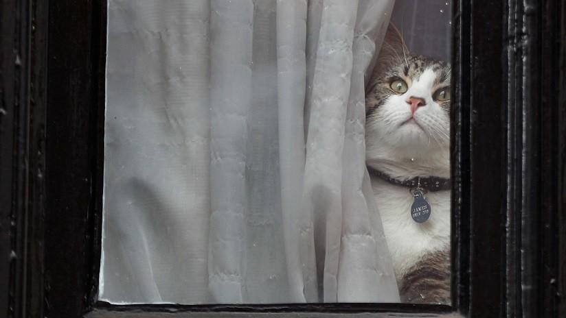 """""""Historias demenciales"""": WikiLeaks responde a la sugerencia de Ecuador de que Assange usó su gato para espiar"""