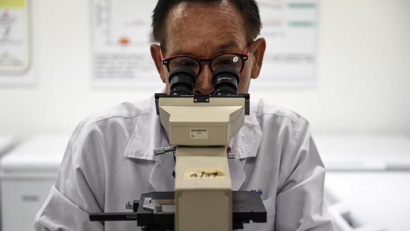 Científicos descifran el secreto de un gusano sin boca ni intestino que ha sobrevivido por 500 millones de años