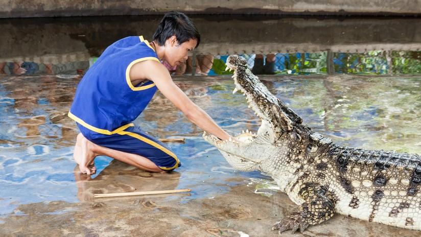 Lo ataca ferozmente un cocodrilo en una pierna y se refugia 12 horas en una refrigeradora
