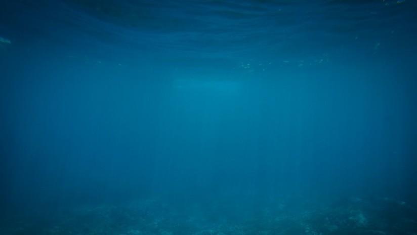 VIDEO, FOTO: Hallan en una fosa oceánica una criatura parecida a un globo con cuerda