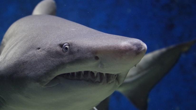 México: Un enorme tiburón blanco casi se come la cámara que lo filmaba (VIDEO)