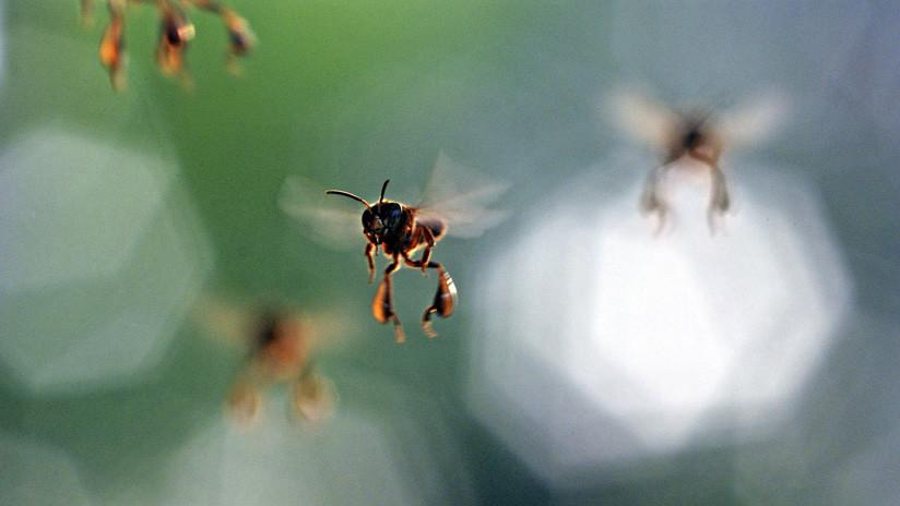 Sobreviven 200 mil abejas a incendio de Notre Dame