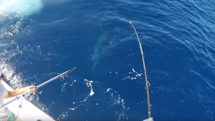 El momento exacto de la captura de un monstruoso pez espada de 343 kilos (VIDEO)