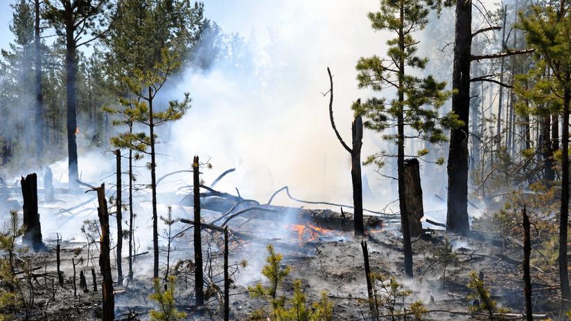 VIDEOS: Incendios en Siberia dejan decenas de heridos y casas destruidas