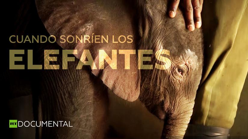 Cuando sonríen los elefantes