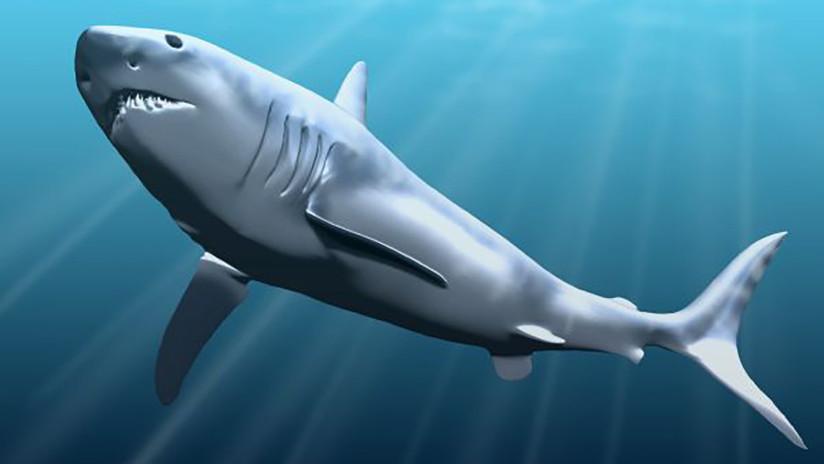 FOTO: Una niña halla un diente de un enorme tiburón prehistórico en una playa