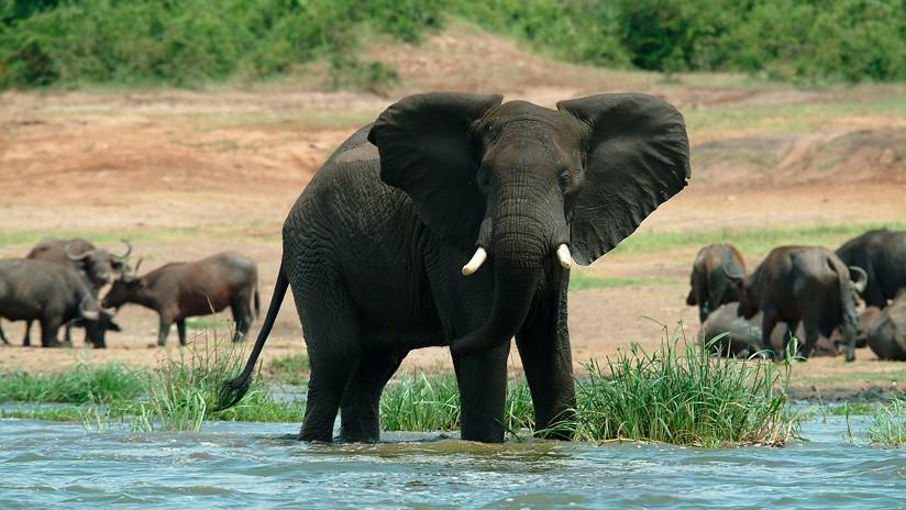 """FOTO: Celebran haber matado un elefante """"excepcional"""" en un parque nacional y causan indignación"""