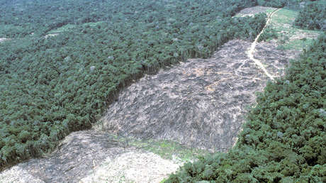 Zonas deforestadas se ven en la amazonia brasileña.