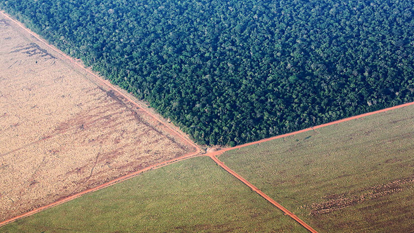 Más de 600 científicos piden a la UE que condicione el comercio con Brasil a la protección ambiental y los derechos indígenas