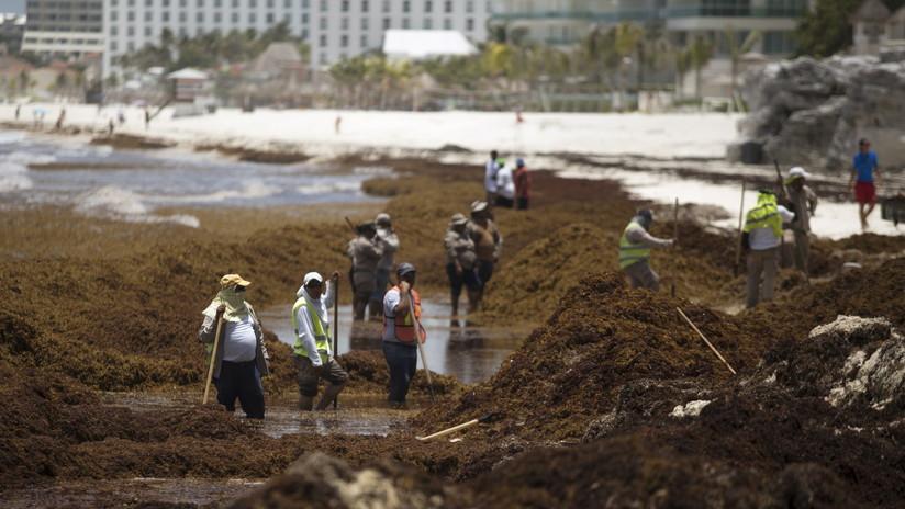 México crea grupo de trabajo para atender crisis del sargazo en playas del Caribe