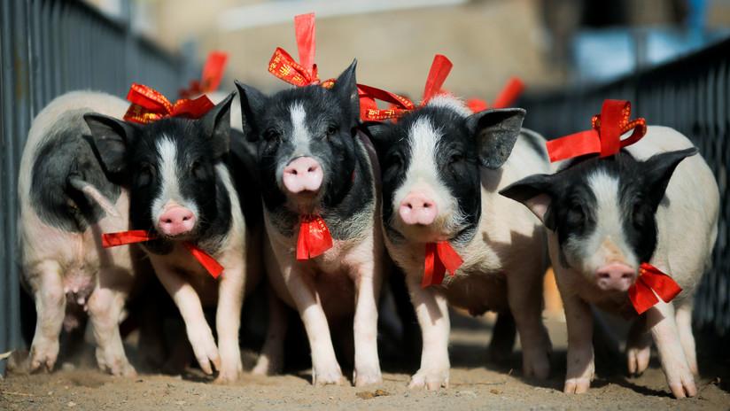 Cómo la peste porcina de China pone en vilo los mercados globales