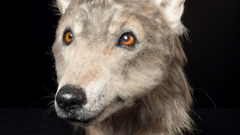 FOTO: Innovadora recreación de la cabeza de un perro revela misterios de un túmulo escocés