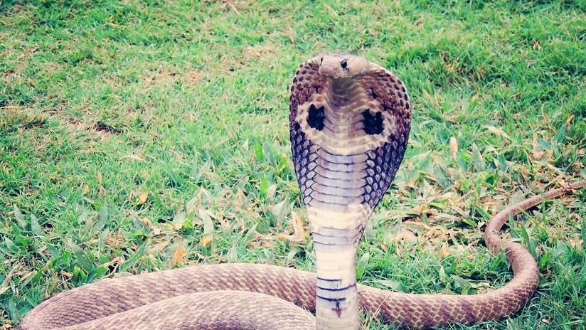 Una serpiente muerde a un anciano y este le responde de igual manera
