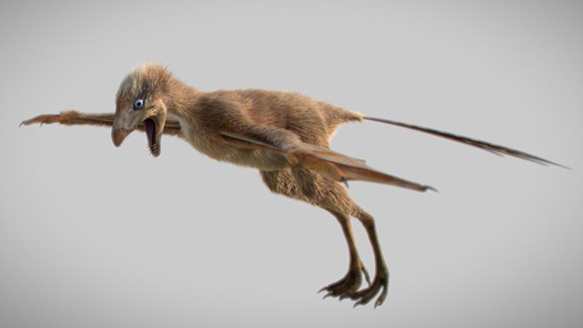 VIDEO: Descubren en China una especie de dinosaurio que volaba con alas de murciélago