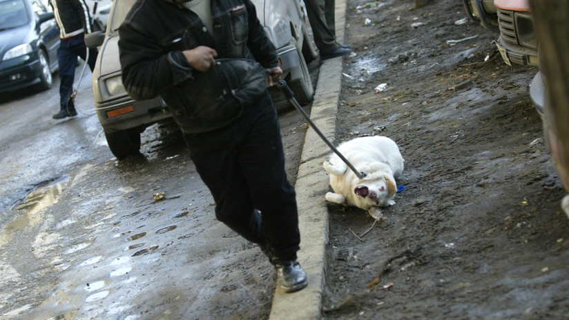 Policía da una lección a mujer que maltrató a su perro