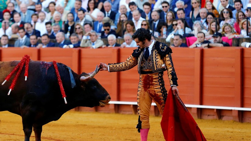 VIDEO: Torero limpia las lágrimas a un toro antes de matarlo y desata polémica en la Red