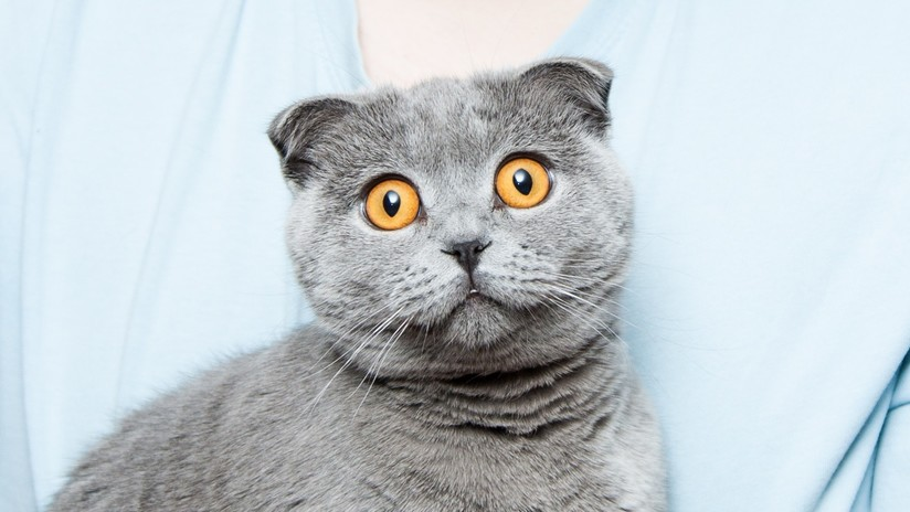 VIDEO: Un gato tranquiliza a un niño que sufre una crisis nerviosa (de una forma muy particular)