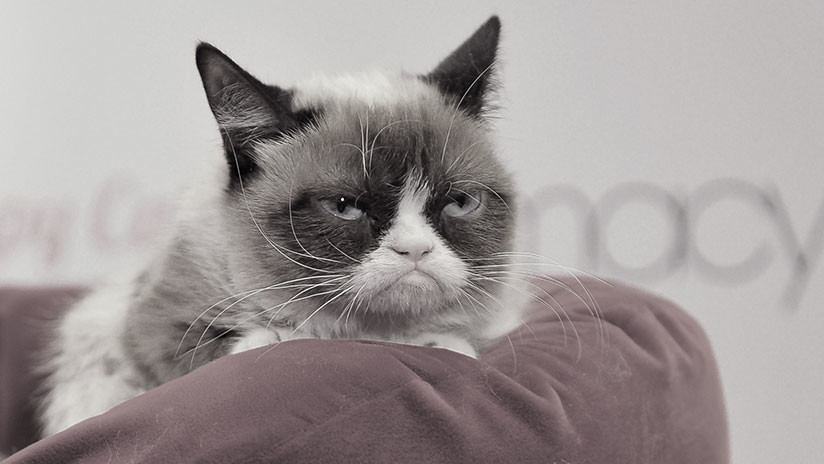 Fallece a los 7 años Grumpy Cat, la gata más famosa de Internet