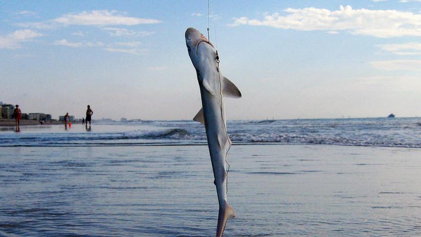 Hallan un centenar de tiburones muertos con las aletas cortadas en una costa en el Reino Unido (FOTO)