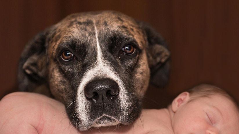 Un perro cojo salva la vida de un recién nacido enterrado vivo por su madre adolescente en Tailandia