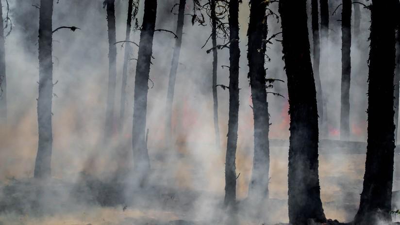 Descubren una técnica de los indígenas de Norteamérica de hace 2.000 años que cambió el ecosistema más que las causas climáticas