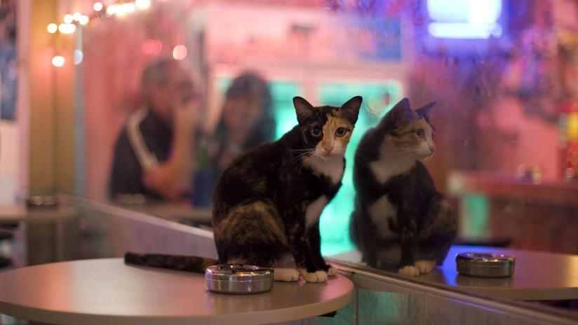 FOTO: Un gato que se mira en dos espejos a la vez desconcierta a la Red