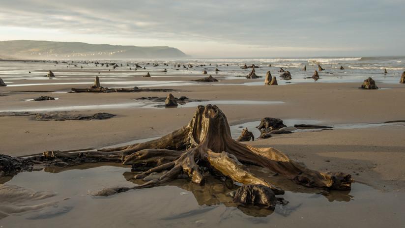 FOTOS: Una fuerte tormenta hace reaparecer un bosque prehistórico de hace 4.500 años en el Reino Unido