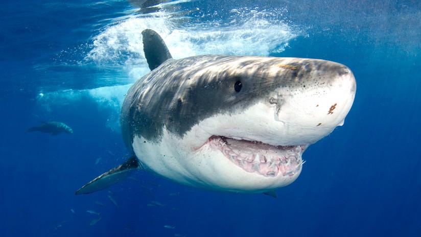 VIDEO: Un enorme tiburón blanco ataca el bote donde pescaban un padre y su hijo