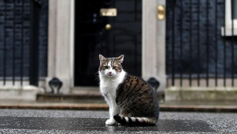 VIDEO, FOTO: Interrumpen el descanso del gato Larry de Downing Street ante el anuncio de dimisión de May