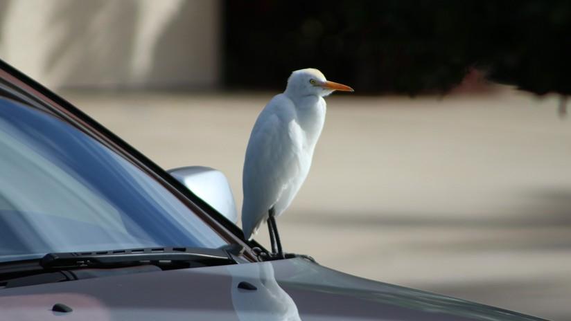 Un pájaro salva a un conductor alemán de una multa por exceso de velocidad (FOTO)