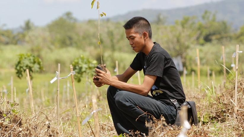 Filipinas 'se va por las ramas': obliga a los estudiantes a plantar 10 árboles si quieren graduarse