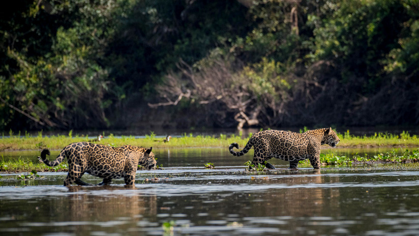 Los 10 países del mundo con más especies animales en peligro de extinción (y México es el primero)