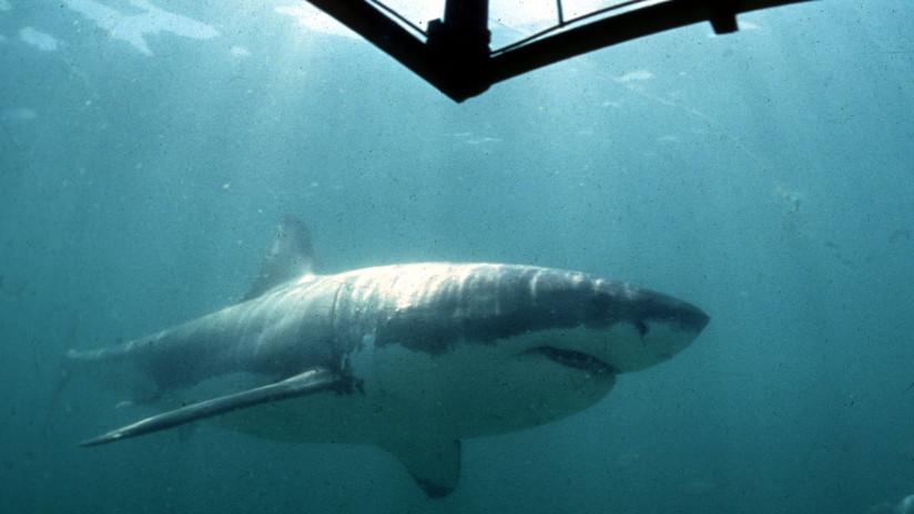 VIDEO: Un fotógrafo se salva de que un enorme tiburón blanco lo ataque en la cara