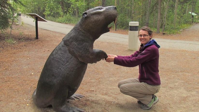 Descubren por qué se extinguieron los castores gigantes, que llegaban a medir hasta 2 metros