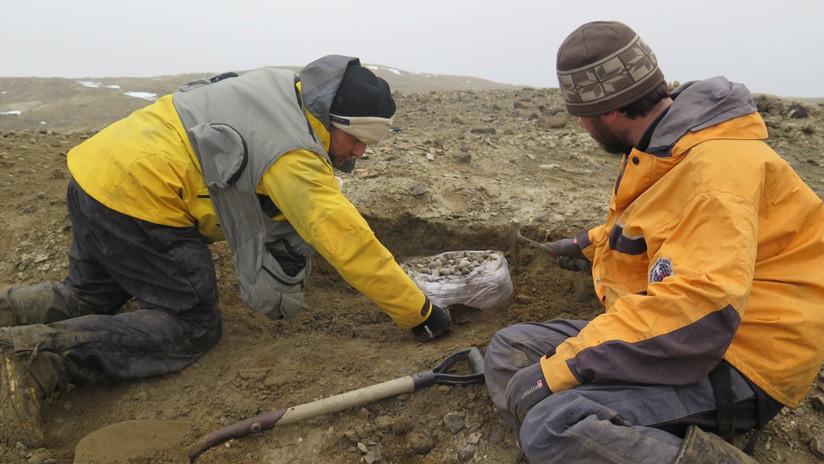 FOTO: Argentinos descubren en la Antártida los restos de un gigantesco dinosaurio marino de más de 11 metros y 10 toneladas