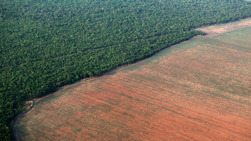Amazonía en peligro: la deforestación del 'pulmón vegetal del mundo' crece en la era Bolsonaro