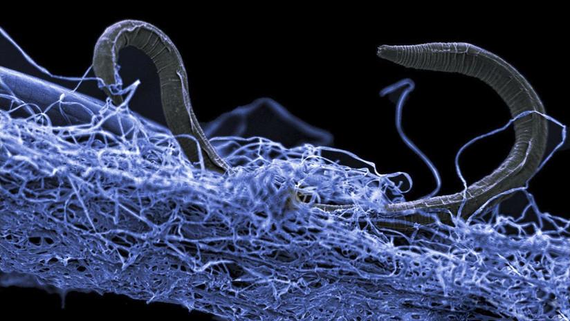 """Un descubrimiento sobre el sistema nervioso humano echa por tierra """"uno de los dogmas más básicos de la biología"""""""