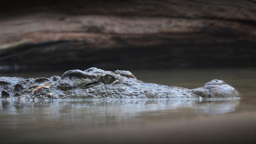 FOTO: Captan a un caimán con un cuchillo en la cabeza en un lago de Texas