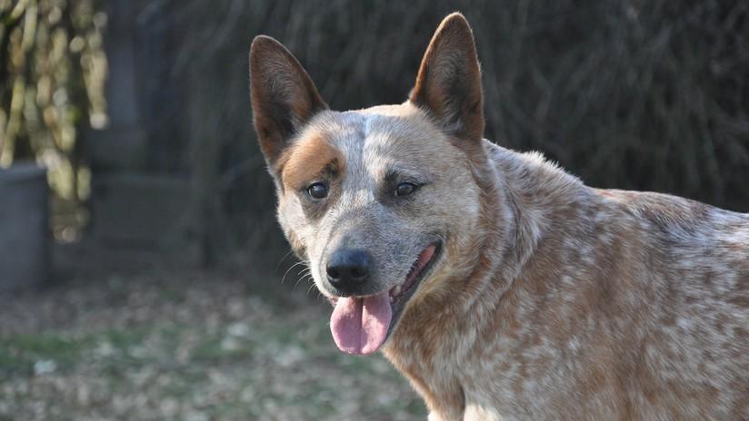 EE.UU.: Una familia deja su perro en un refugio de animales y lo sacrifican por error (FOTO)