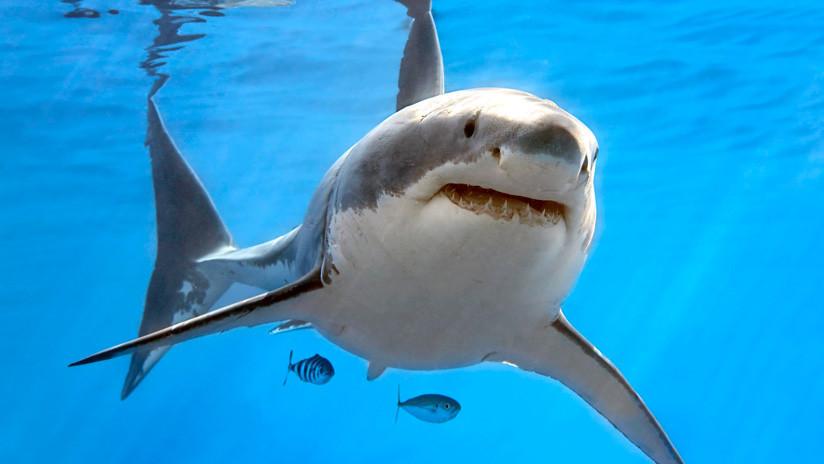 FOTOS: Avistan a un gran tiburón blanco frente a las costas de EE.UU.