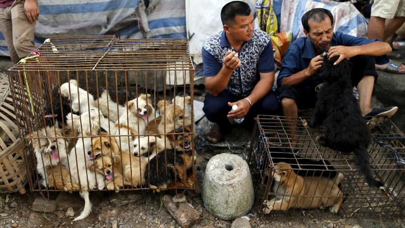 Más de 3,6 millones de personas firman la petición para prohibir el festival chino donde se consume carne de perro